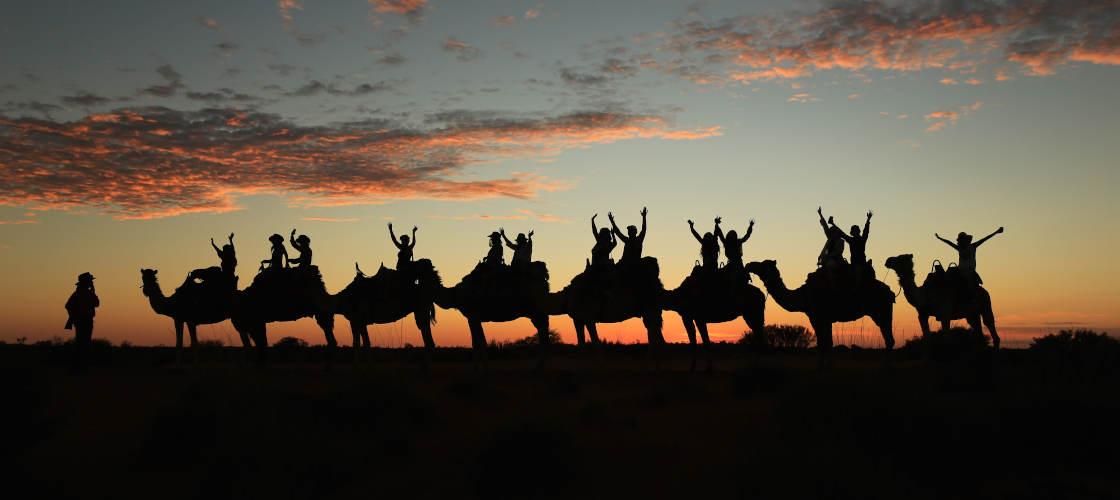 uluru camel tours sunset experience