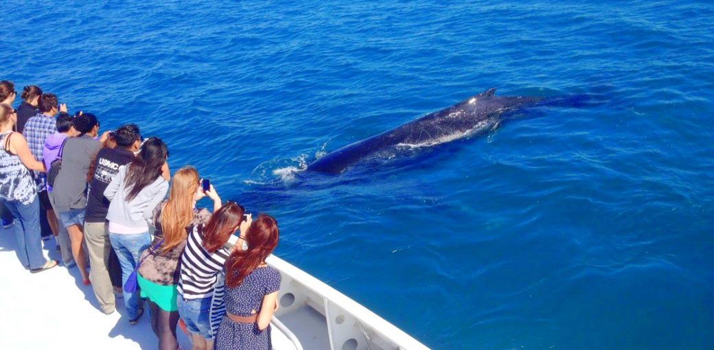 Moonshadow Cruises Whale Watching