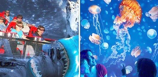 SEA LIFE Mooloolaba and 7D Movie Package