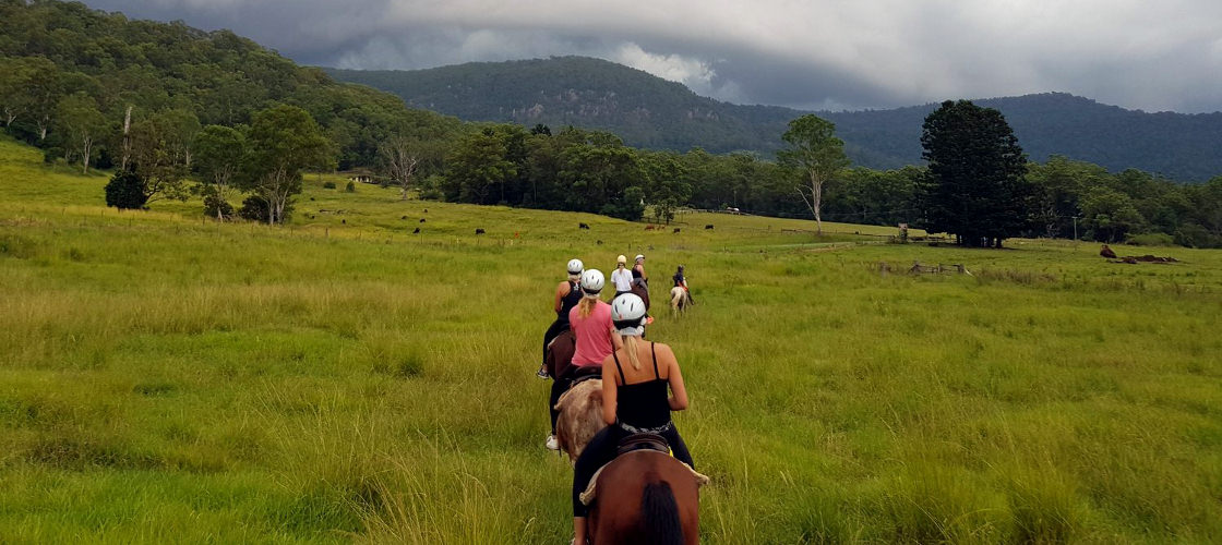 gold coast horse riding numinbah trails