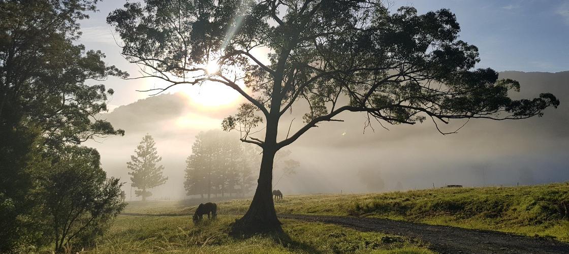 Numinbah Misty View