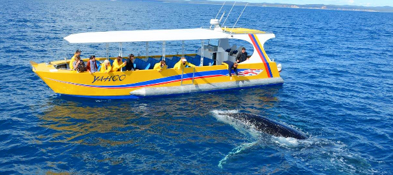 Adventure Whale Watching Cruise