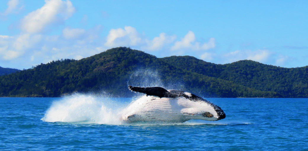 Ocean Dynamics whitsundays whale watching cruise