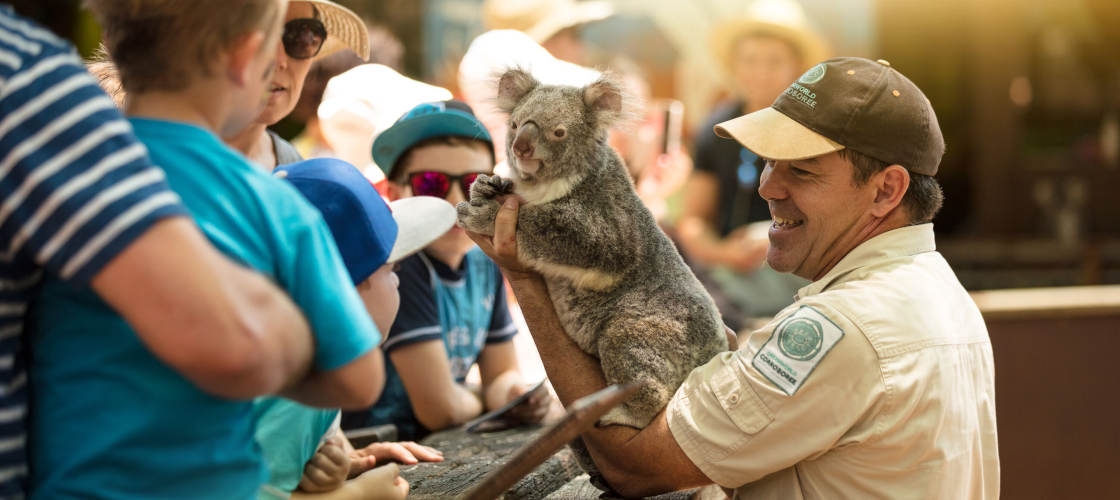 dreamworld tickets koala