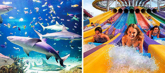 Wet n Wild Sydney and Sydney Aquarium Combo