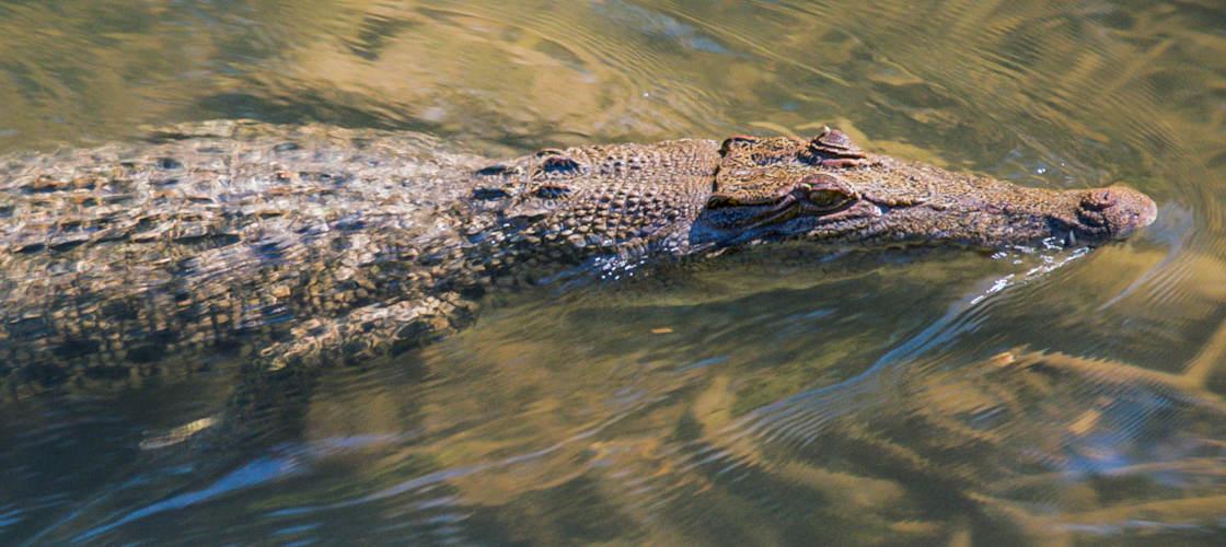 outback floatplane darwin crocodile