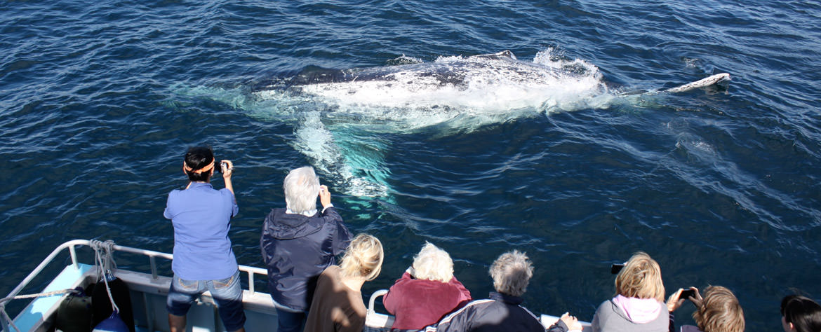 Whale Watch Cruises from Coolangatta