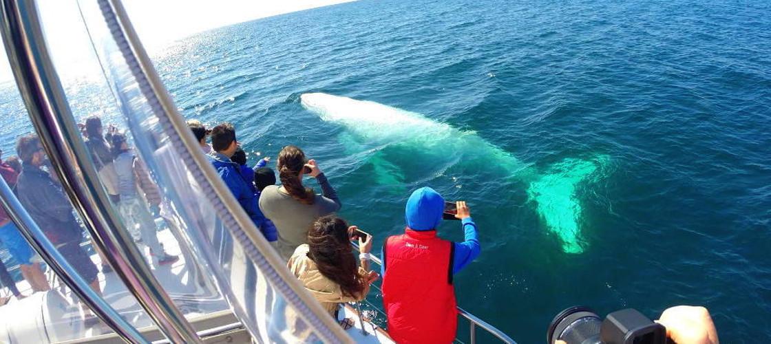 whale watch in gold coast sea world