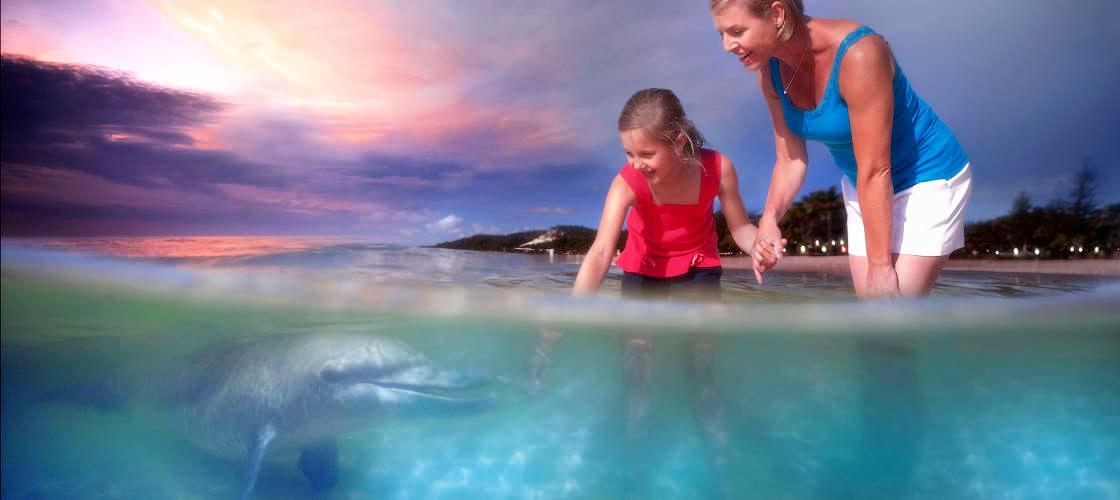 Feeding dolphins at Tangalooma