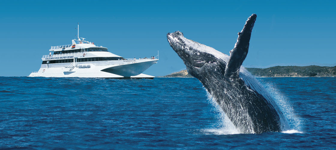 tangalooma whale watch