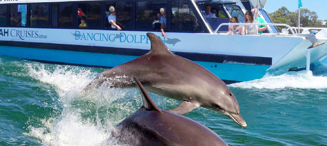 dolphins cruise boat