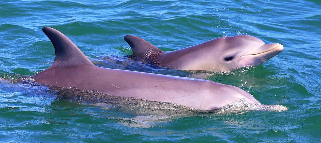 mandurah dolphins cruise