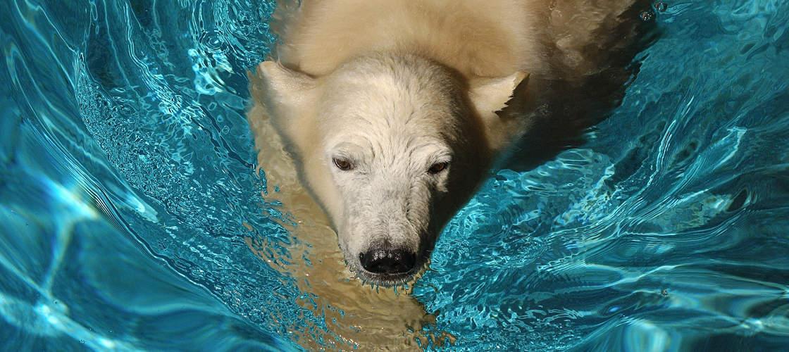 Gold Coast Polar Bears