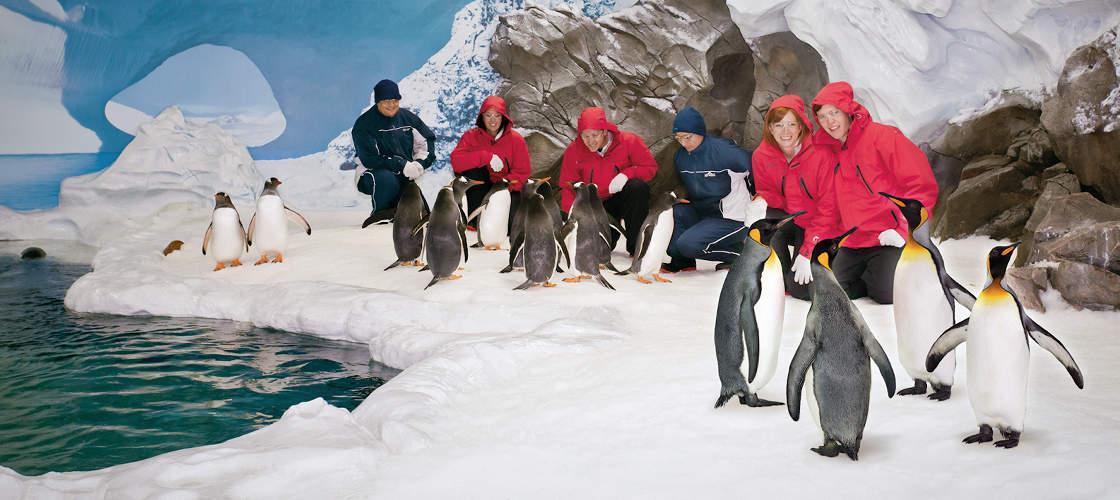 penguin encounter Sea World