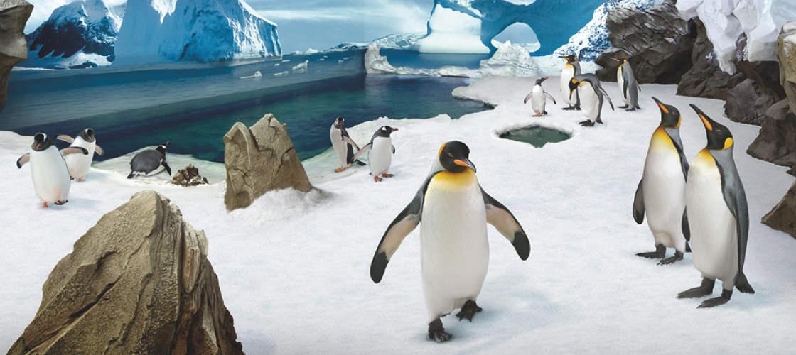 Sea World Penguin Encounter