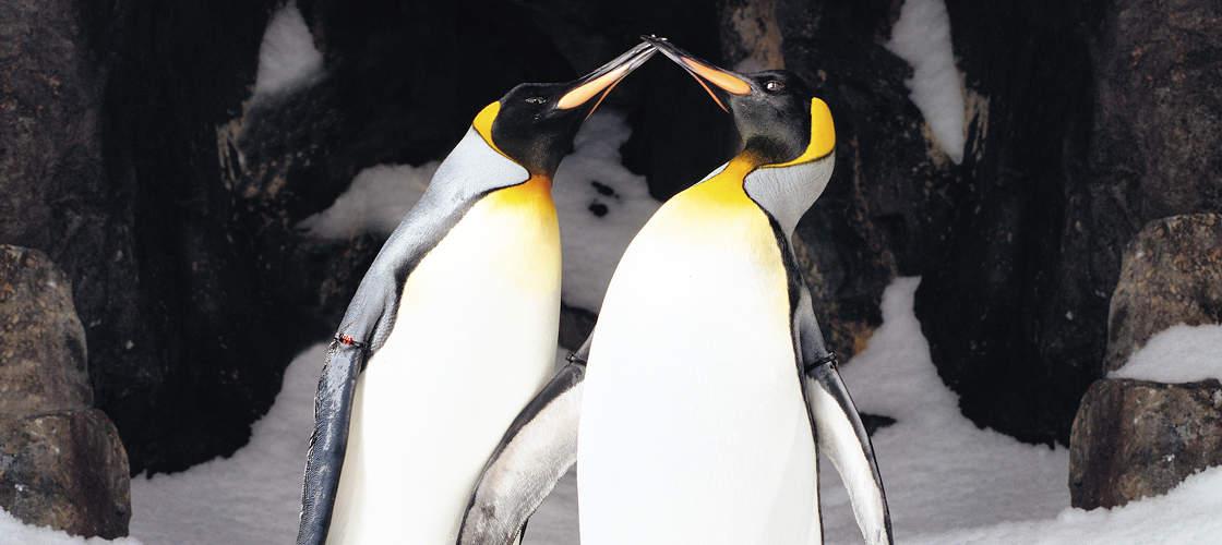 Gold Coast Penguins