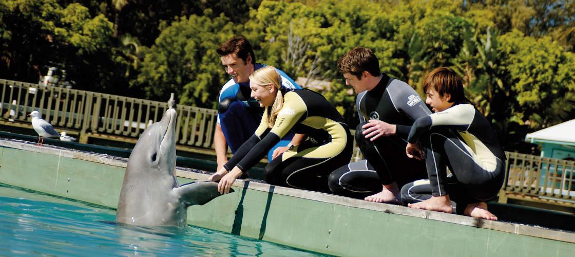 Dolphin Trainer Gold Coast