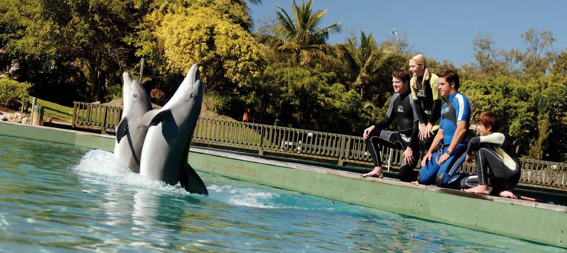 Dolphin Trainer Sea World