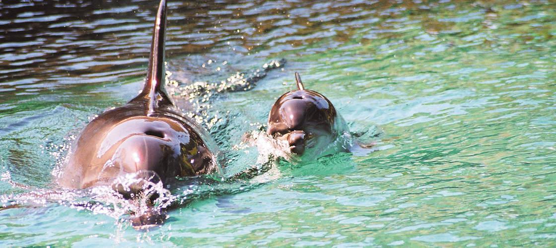 Dolphins Sea World Gold Coast