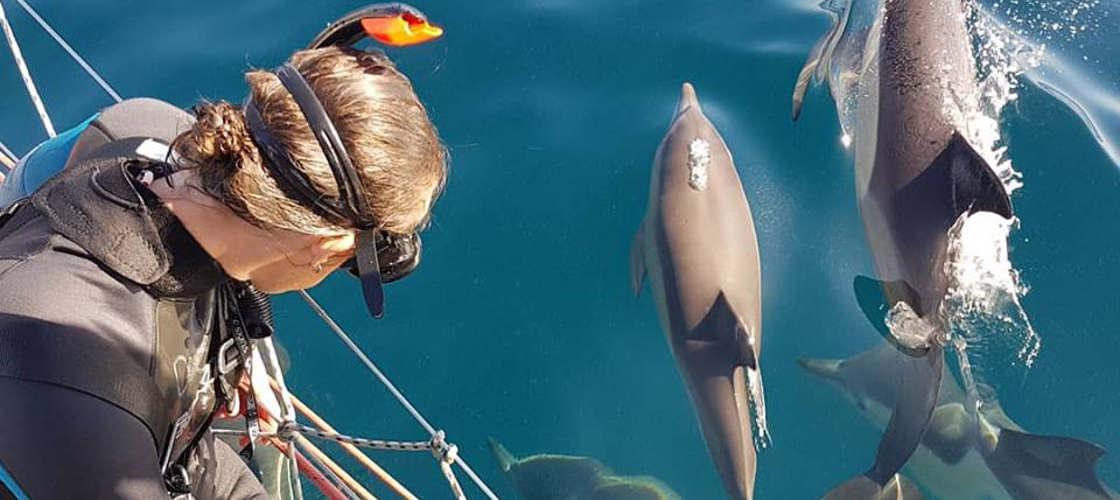 Dolphin Swim and cruise