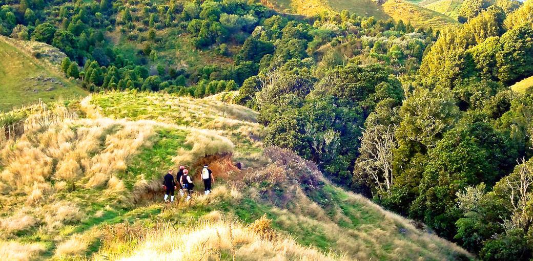 Free Things To Do  The Waitomo Walkway