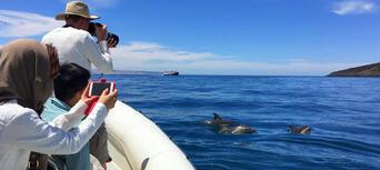 Kangaroo Island Dolphin Safari Cruise Thumbnail 1