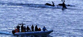 Kangaroo Island Dolphin Safari Cruise Thumbnail 2