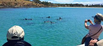 Kangaroo Island Dolphin Safari Cruise Thumbnail 3