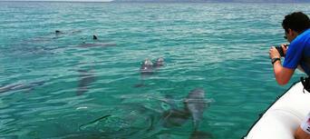 Kangaroo Island Dolphin Safari Cruise Thumbnail 4