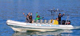 Kangaroo Island Dolphin Safari Cruise Thumbnail 5