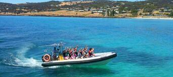 Kangaroo Island Dolphin Safari Cruise Thumbnail 6