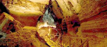 Waitomo Glowworm Caves and Ruakuri Cave Combo Thumbnail 3