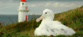 Royal Albatross Centre Guided Tour with Transfers Thumbnail 6