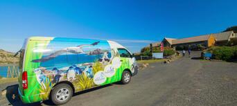 Little Blue Penguins Tour from Dunedin Thumbnail 4