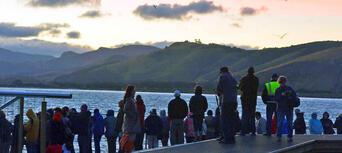 Little Blue Penguins Tour from Dunedin Thumbnail 3