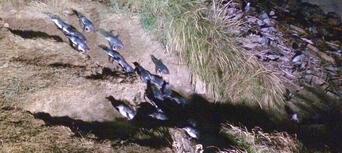 Little Blue Penguins Tour from Dunedin Thumbnail 6
