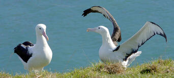 Unique Royal Albatross and Fort Taiaroa Tour Thumbnail 2