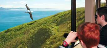 Unique Royal Albatross and Fort Taiaroa Tour Thumbnail 3