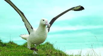 Unique Royal Albatross and Fort Taiaroa Tour Thumbnail 1