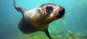 Seal Swim Kaikoura Thumbnail 2