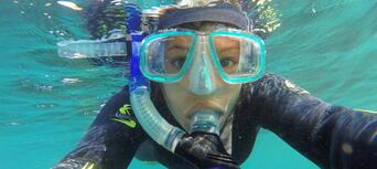 Seal Swim Kaikoura Thumbnail 6