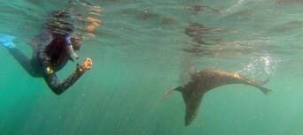 Seal Swim Kaikoura Thumbnail 1