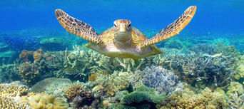 Great Barrier Reef Cruise to Sunlover Reef Cruises Pontoon Thumbnail 1