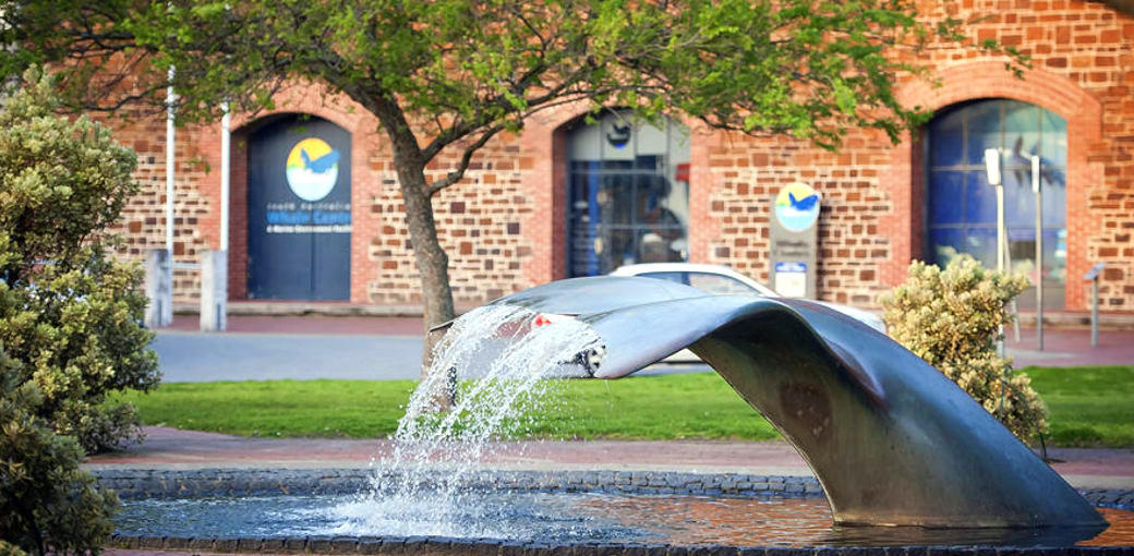 Free Things To Do  South Australian Whale Centre