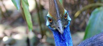 Wildlife Habitat Port Douglas Tickets Thumbnail 4