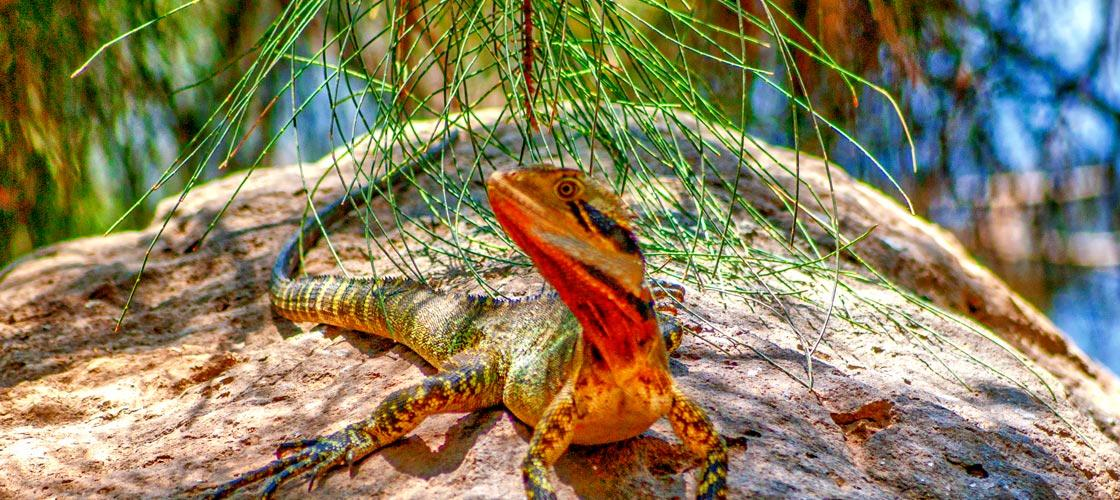 Free Things To Do  Bundaberg Botanical Gardens