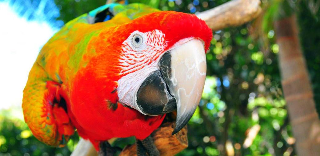 The Parrot Place