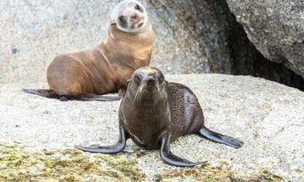 Victor Harbor Seal Island Cruise Thumbnail 2