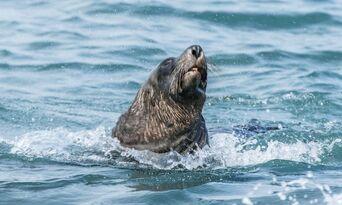 Victor Harbor Seal Island Cruise Thumbnail 3