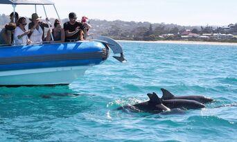Victor Harbor Southern Ocean Adventure Cruise Thumbnail 6
